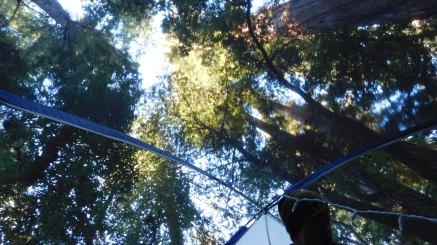 View from our tent - Red Basin Redwoods State Park, CA (Photo by Alex)