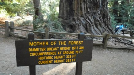 Mother of the Forest sign - Red Basin Redwoods State Park, CA (Photo by Alex)